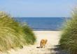 Sandstrand am Meer mit Hund und Düne