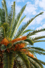 The Image Of Palm