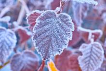 霜がついた植物の葉