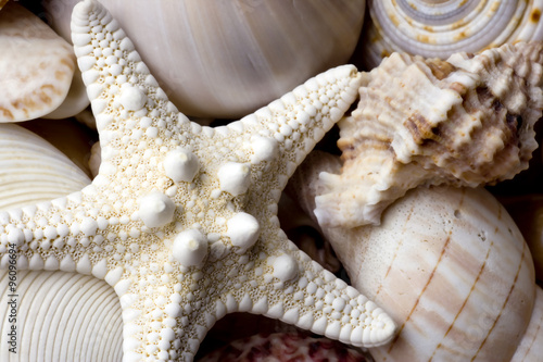 Fotografia seashell background