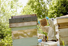 A Beekeeper In A Protective Su...