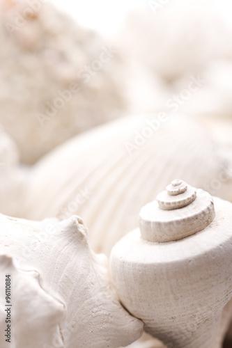 Fototapeta fossilized seashell background