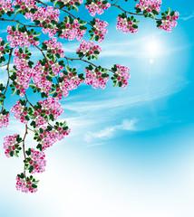 Fototapeta Egzotyczne Spring landscape. Orchard. flowering branch