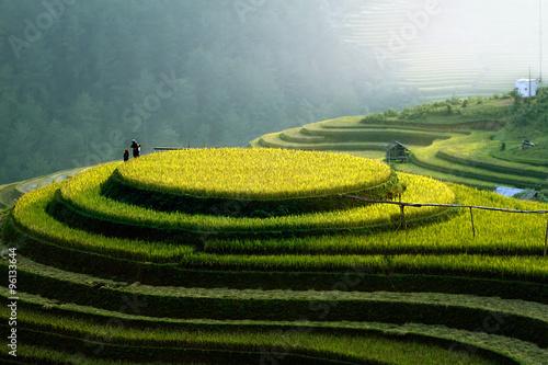 Photo  Rice fields on terraced of Mu Cang Chai, YenBai, Vietnam