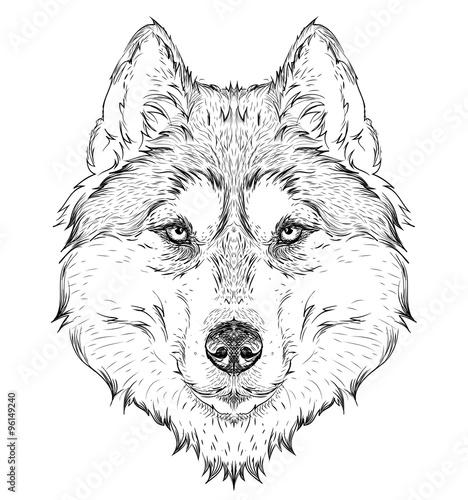 Photo sur Toile Croquis dessinés à la main des animaux Hand draw husky portrait. Hand draw vector illustration