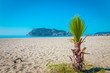 Palm tree on the beach and the beautifull view to ancient fortre
