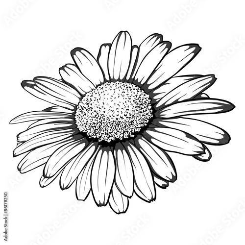 Fotografie, Tablou beautiful monochrome, black and white daisy flower isolated.