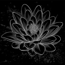Black And White Lotus Flower P...