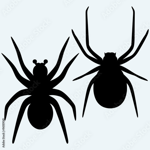 Set spider icon Wallpaper Mural