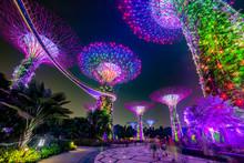 Magic Garden At Night, Singapore