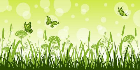 Fototapeta Motyle Summer meadow with flowers and butterflies