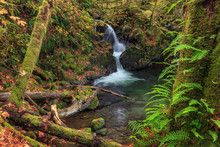 Waterfall In The Quinault State Park, Olympic Peninsula, Washington, USA