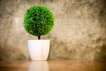 Artificial Small Tree In A Whi...