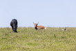 Cattle bulls cows animals on rural farm landscape