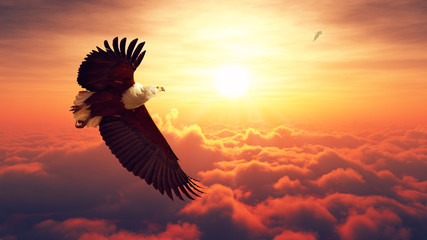 Fototapeta Ptaki Fish Eagle flying above clouds