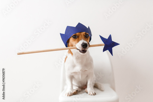Fotografie, Obraz  Dog with the magic wand and crown