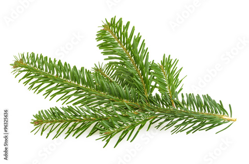 Fotografie, Obraz  Fir tree branch isolated on white
