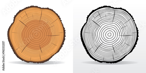 Obraz na plátně Tree rings and saw cut tree trunk