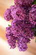 Branch fragrant lilacs