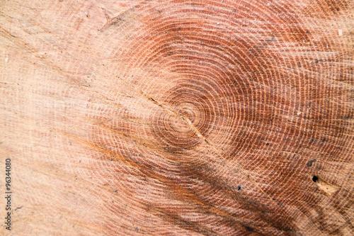 Baumquerschnitt Texture #96344080