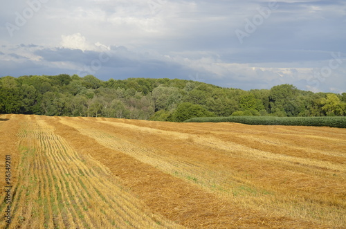 Fotografie, Obraz  Harvested Farmland