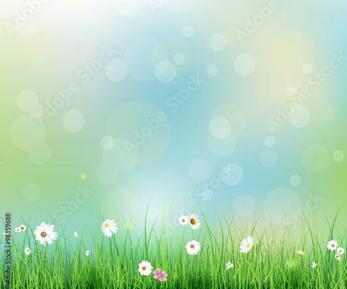 Fényképezés Vector illustration Spring nature field with green grass, white Gerbera- Daisy f