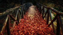 Old Wooden Bridge Covered With...