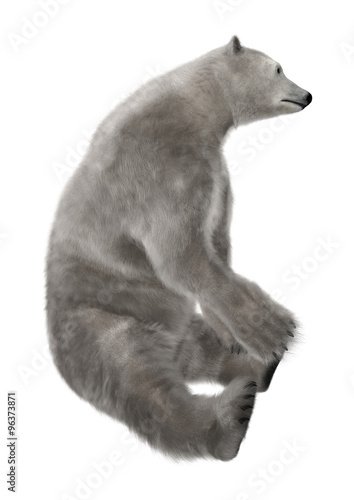 In de dag Ijsbeer Polar Bear Sitting