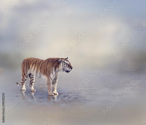 Obrazy na płótnie Canvas Tiger Near Water