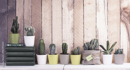 Foto op Canvas Cactus Cactus and succulents collection in small flowerpots. The rustic interior. Retro filter effect