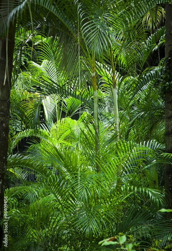 Lush green jungle background Canvas Print