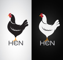 Vector Image Of An Hen Design On White Background And Black Back