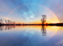 Tree And Sun On Lake Sunrise