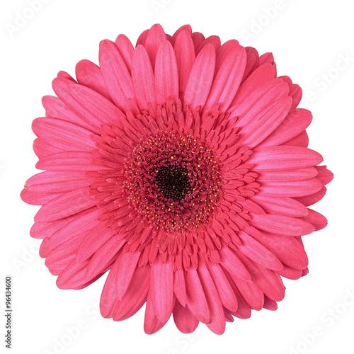 Foto op Aluminium Gerbera Pink Gerbera Flower Isolated