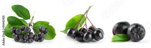 Fotografie, Obraz  Chokeberry with leaf