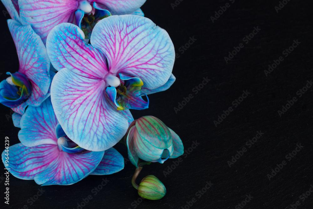 Fototapety, obrazy: Bunch of violet orchids