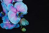 Fototapeta Orchid - Bunch of violet orchids