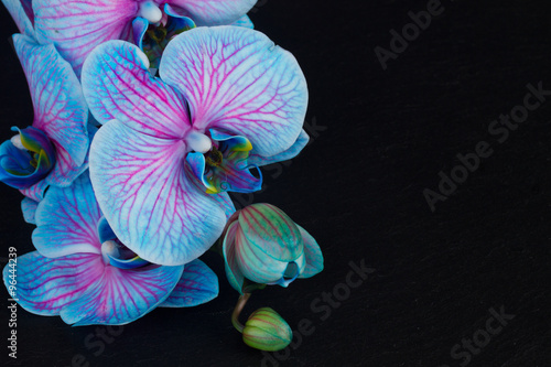 Obraz Kilka fioletowych storczyków na czarnym tle - fototapety do salonu