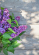 Purple lilac flowers on garden table