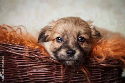 Foto  Süßer Hund