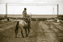 Roping Cattle On A Feedlot. Ru...