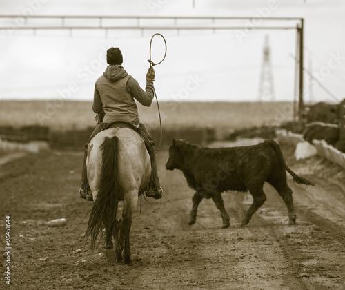Fotografie, Obraz  Roping Cattle at a Feedlot. Rural America.