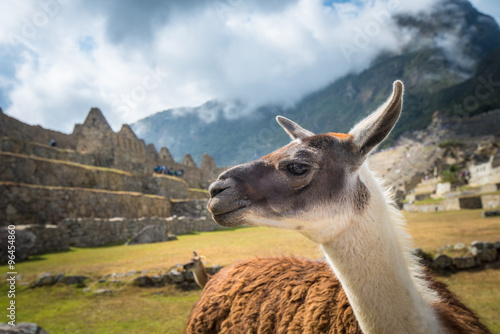 Staande foto Lama Machu Picchu, UNESCO World Heritage Site. One of the New Seven Wonders of the world
