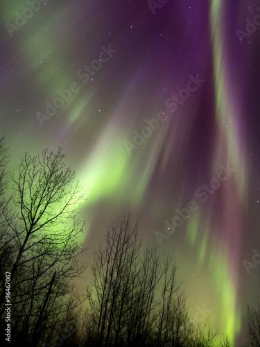 Aurora Borealis (Northern lights) in Alberta, Canada Poster