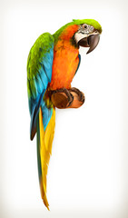 Fototapeta Parrot macaw, vector illustration