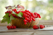 Red Viburnum Berries In Wooden Bowl On The Table With Two Rose H