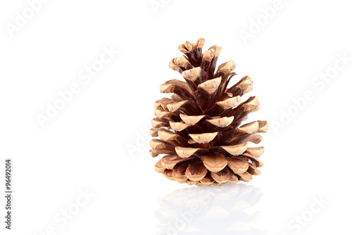 Fotografie, Obraz  Pine cone isolated on white background