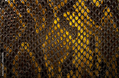 Photo sur Toile Les Textures Snake skin background