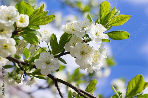 Poster Lente spring tree