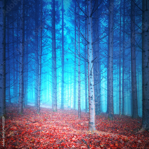 Fototapeta Mystic red and blue colored autumn season foggy forest Filter color effect used Picture was taken in south east Slovenia, Europe